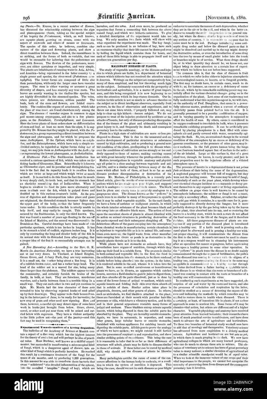 Transformación experimental de un organismo vivo. Enfermedades malignas de las plantas., Scientific American, 1880-11-06 Foto de stock