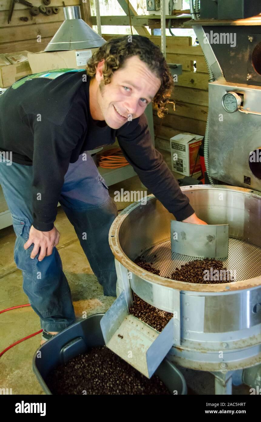 Dueño transferir Kaleo enfría los granos de café en el recipiente, de Kaleo Koffee, Pua'a Kea Farm, Pa'auilo, Isla Grande. Foto de stock