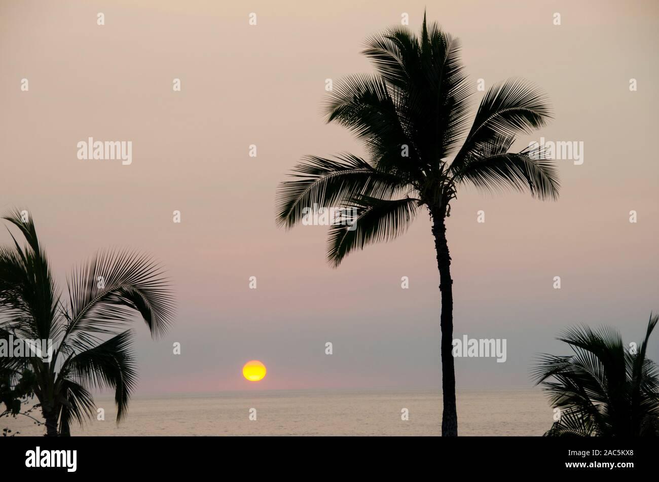 Siluetas de palmeras enmarcan una hermosa puesta de sol en el Hapuna Beach, Isla de Hawai'i. Foto de stock
