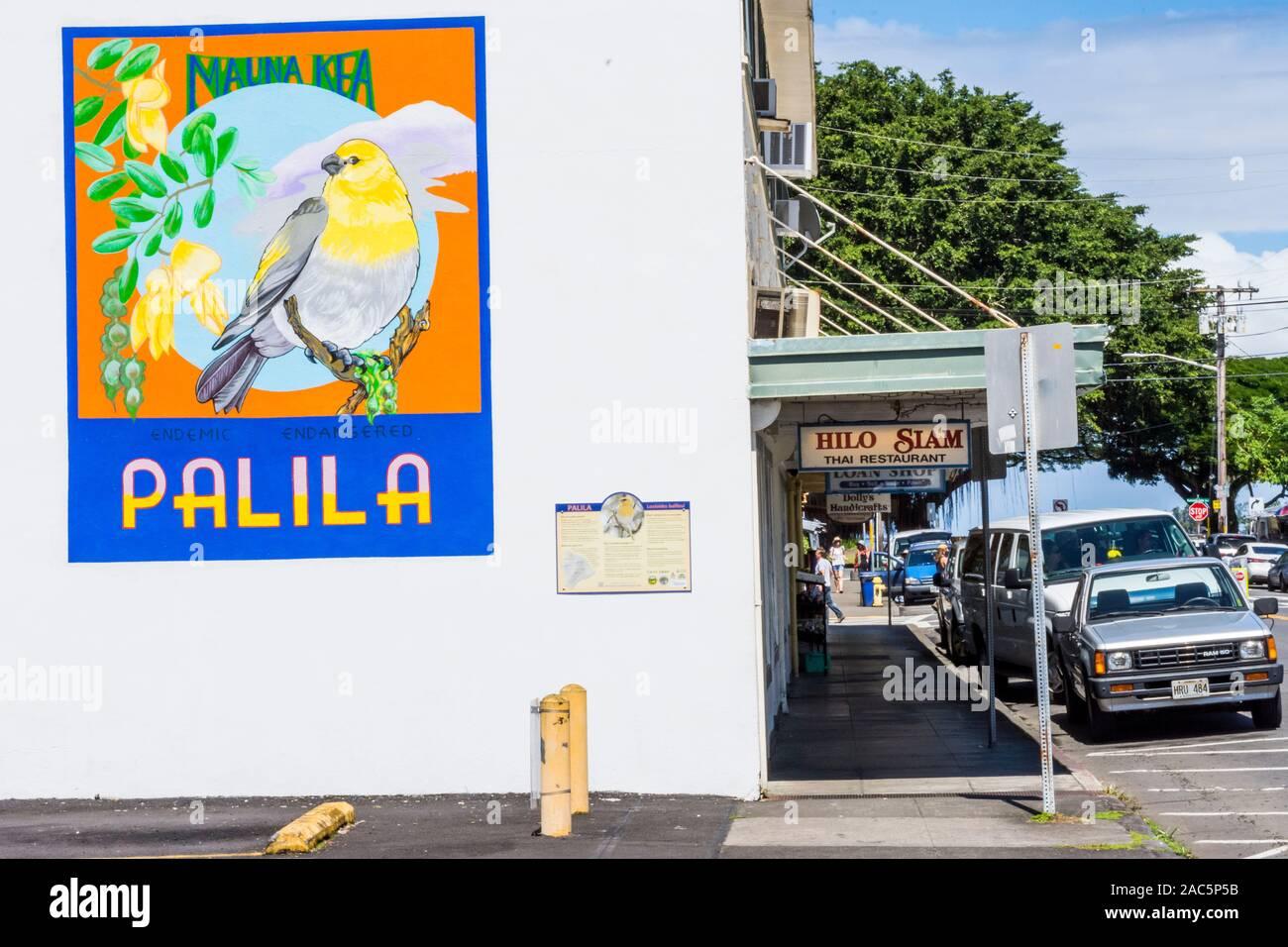 Hermosas obras de arte de los nativos palila aves amenazadas en el lateral de un edificio en el centro de la ciudad de Hilo, la Isla Grande de Hawai'i. Foto de stock