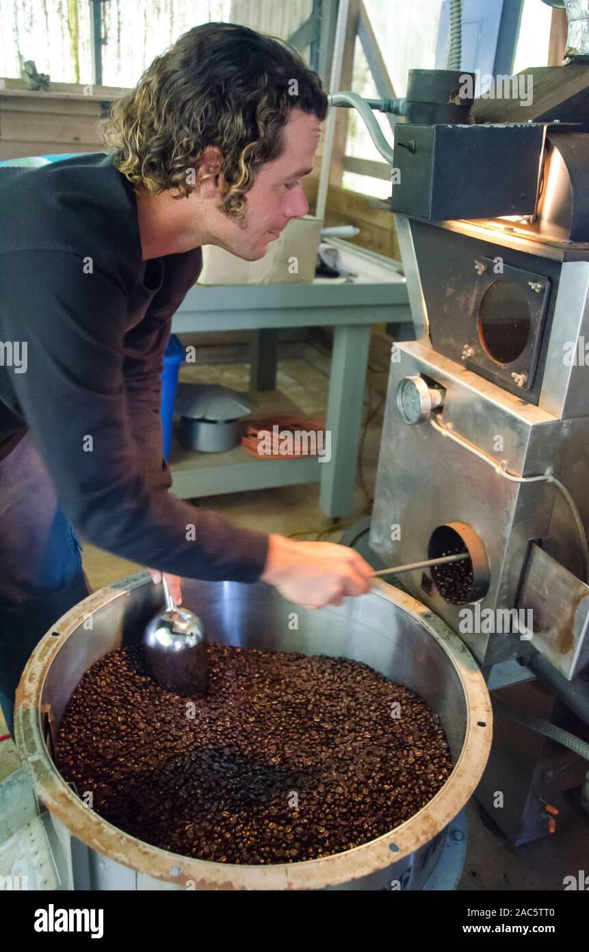 Propietario de negocio Kaleo vaciando tostadoras de café tostado en grano, de Kaleo Hamakua Koffee, área, Isla Grande. Foto de stock