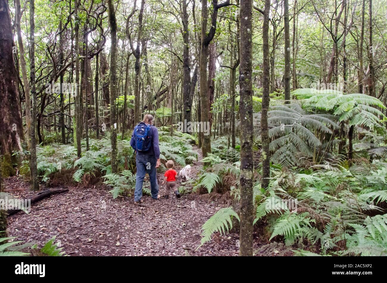 Un hombre local y un joven con su perro caminata por el bosque nativo en Kalopa Loop Trail State Park, Costa Hamakua, Isla Grande. Foto de stock