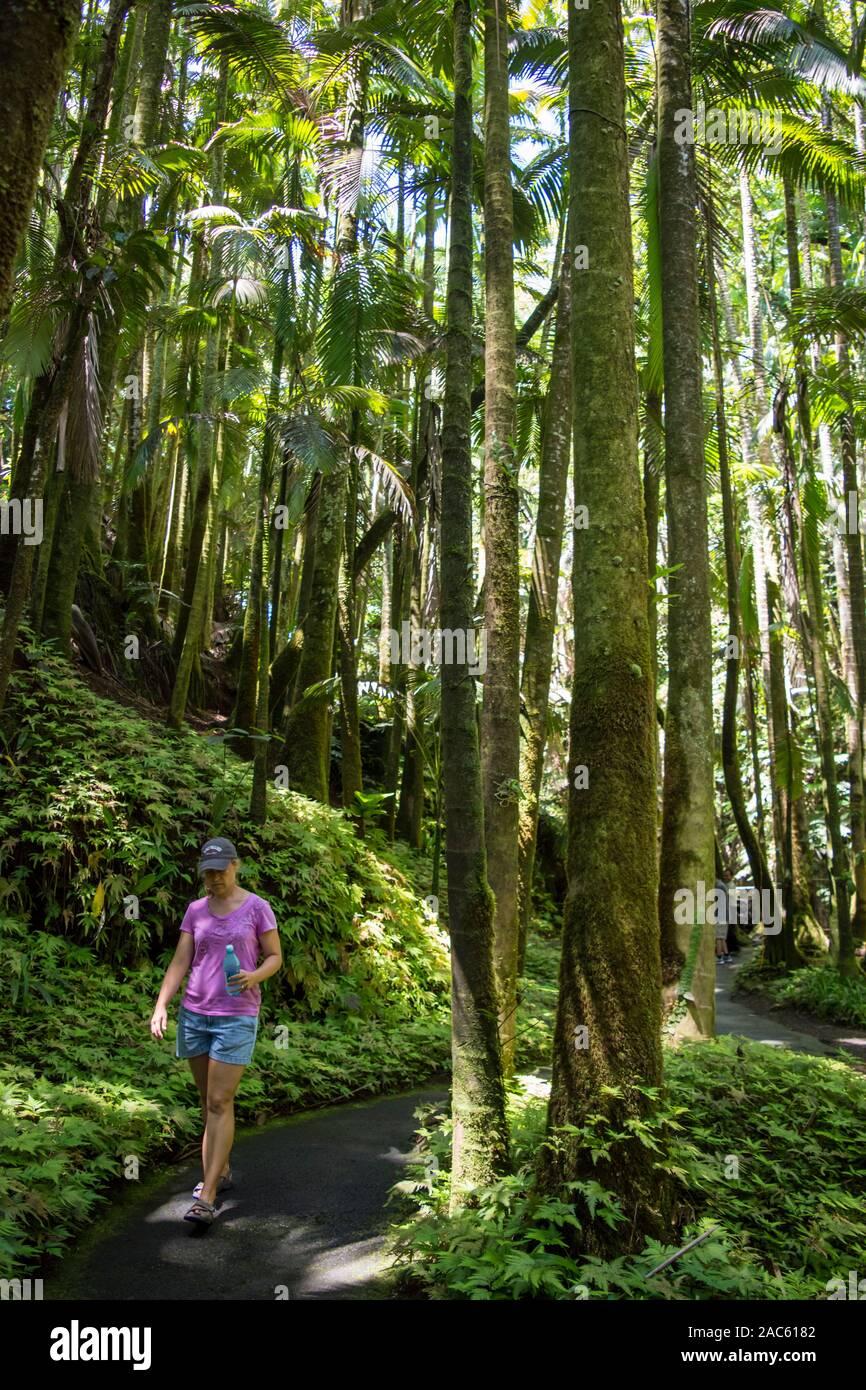 Una mujer toma un camino pacífico a través de altas palmeras y helechos en el jardín botánico tropical de Hawaii, Papa'ikou, la Isla Grande de Hawai'i. Foto de stock