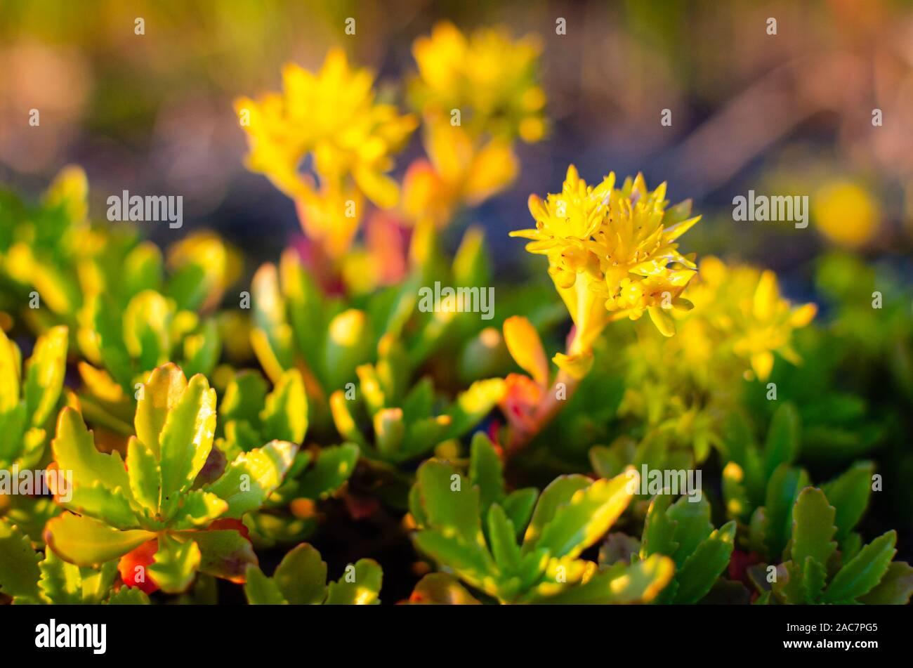 Unas Flores Amarillas Con Algunas Hojas Verdes Foto Imagen