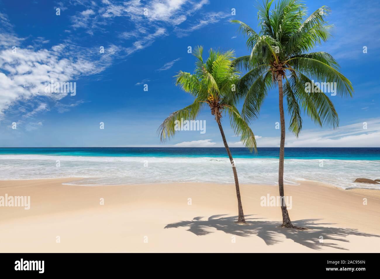 Palmeras en Sunny Beach y el mar turquesa en la isla caribeña. Foto de stock