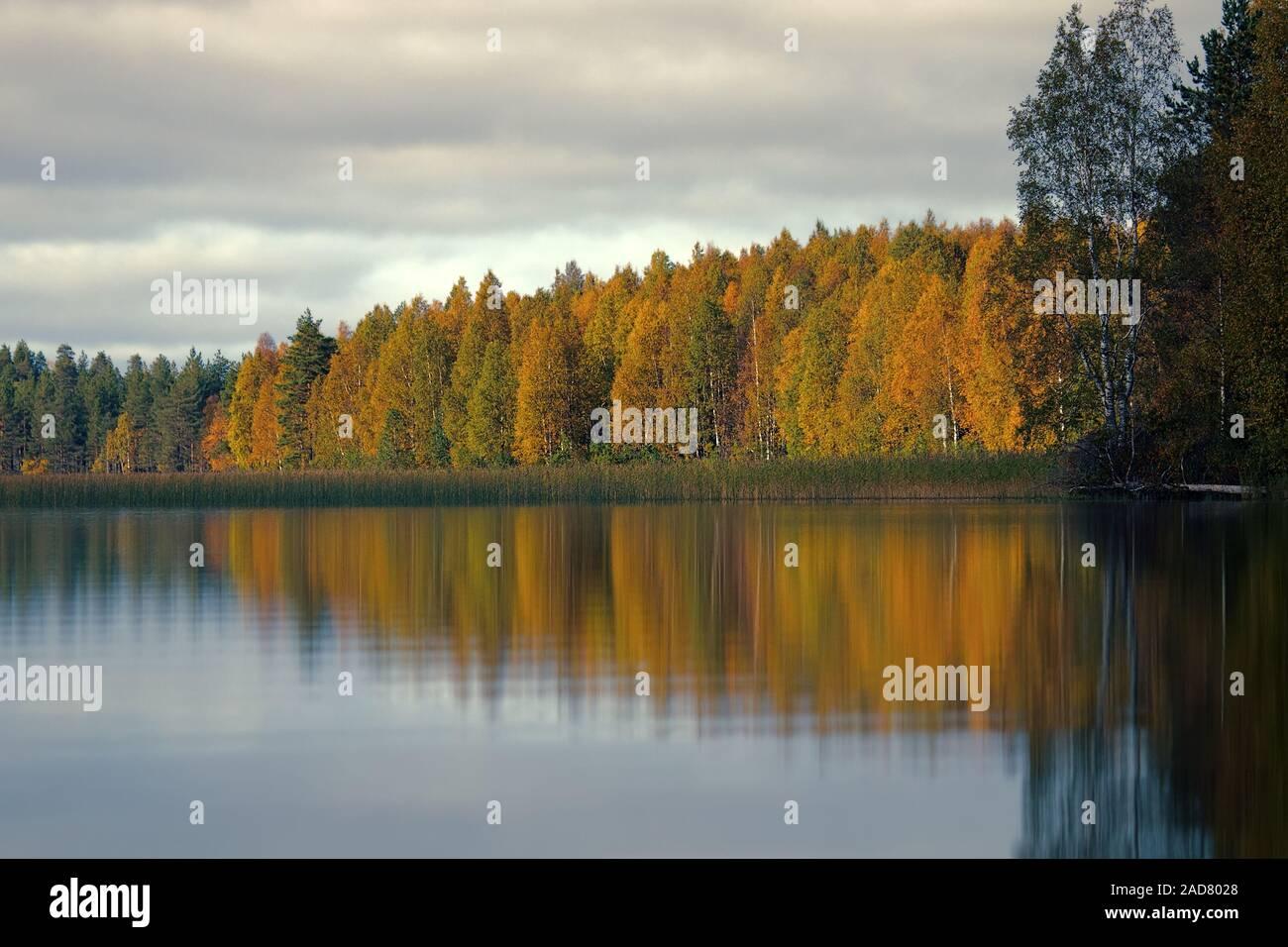 Amplia gama de colores de otoño bosque a orillas del tranquilo lago brumoso Foto de stock