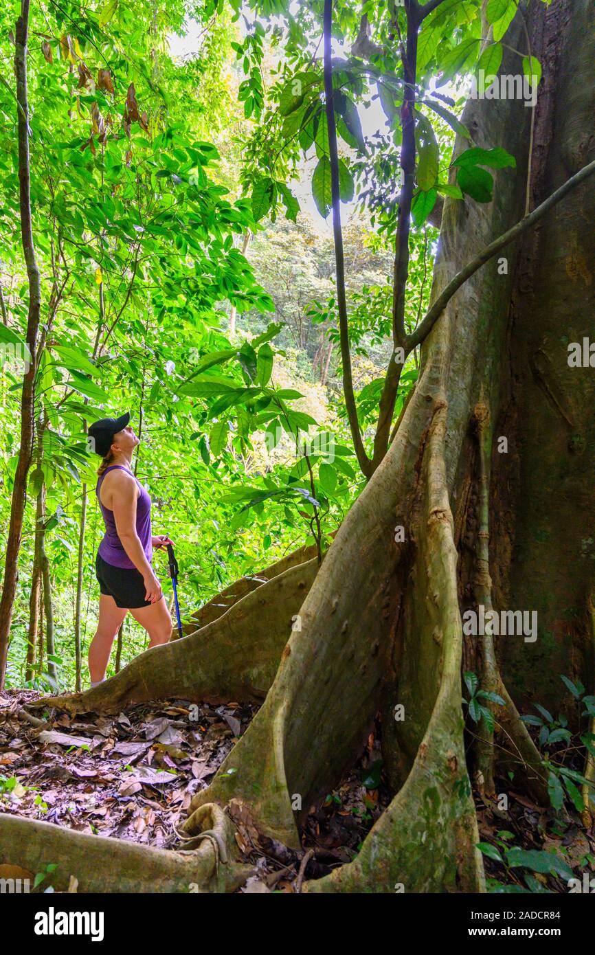 Caminatas En El Bosque Lluvioso De Costa Rica Cerca De Quepos Provincia De Puntarenas Costa Rica Fotografia De Stock Alamy