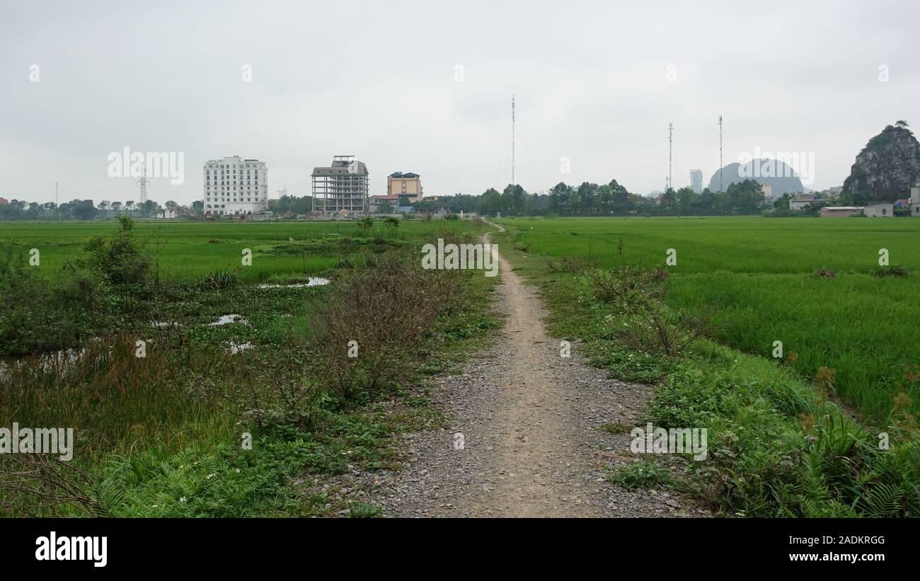 Una ruta corta a través de campos de arroz cerca de Ninh Binh, Vietnam Foto de stock
