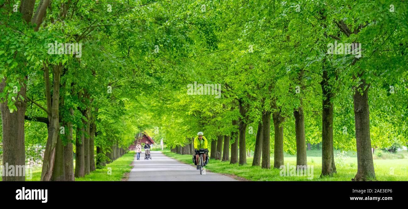 Gira ciclista bicicleta Equitación a lo largo de calle arbolada en ciclo de Vltava router 7 ruta Eurovelo Veltrusy Central Región de Bohemia República Checa. Foto de stock