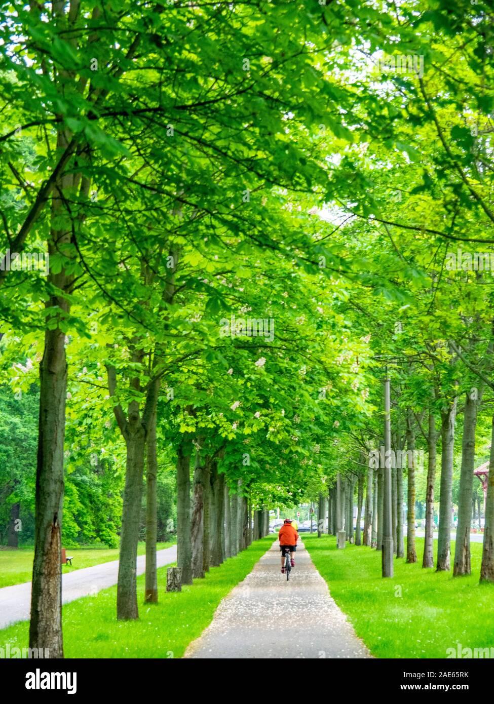 Ciclismo de turismo montar en bicicleta por la ruta Elbe Cycle Route en Elbauenpark Magdeburg Sajonia-Anhalt Alemania Foto de stock