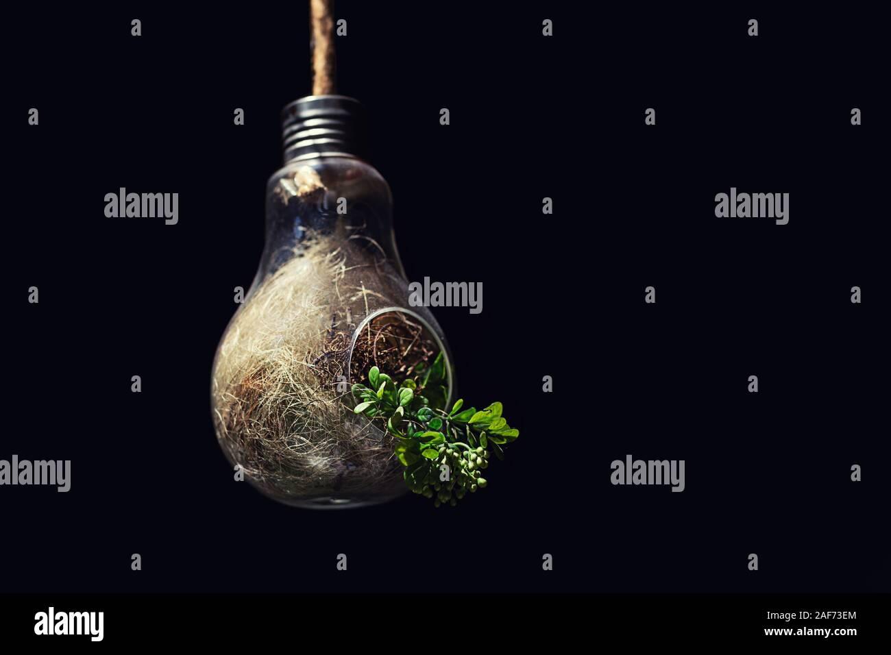 El concepto de la conservación del medio ambiente y con la planta de energía verde que crece en su interior bombilla Foto de stock