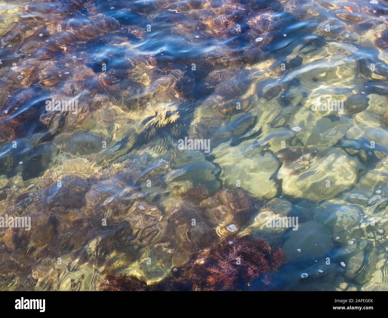 Las algas y piedra, bajo el agua de mar. Tuapse, el Mar Negro, el Cáucaso Foto de stock