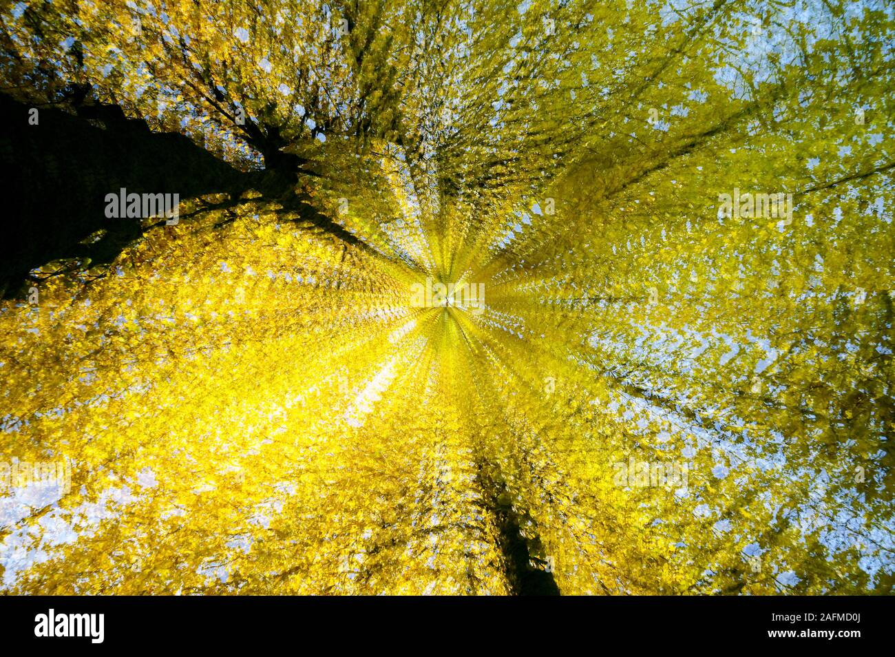 Hojas caer exposición múltiple Abstract Foto de stock