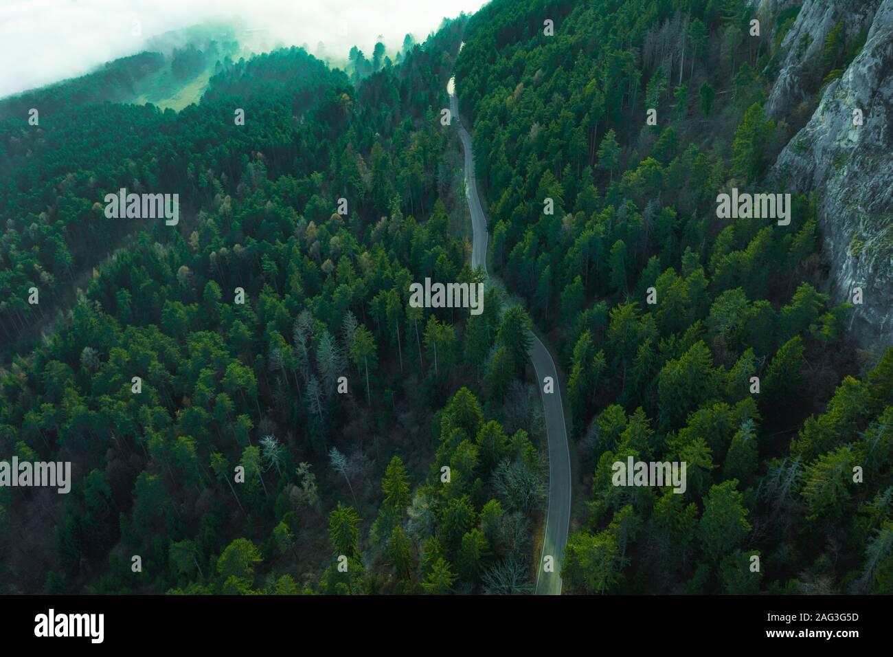 Camino en el bosque de otoño vista aérea Foto de stock