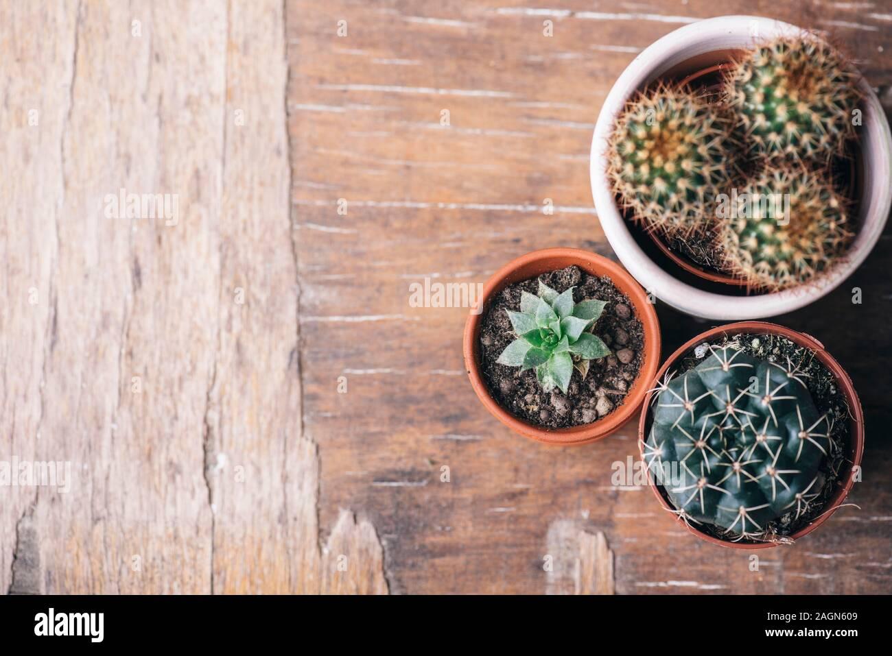Varias plantas de cactus y suculentas en olla de barro y herramienta de jardinería sobre fondo de madera vintage desde arriba. Houseplant creciente afición y spring flower Foto de stock