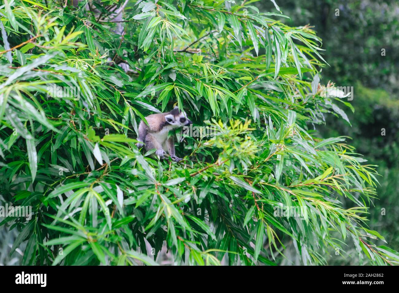 Follaje Tela Tropical de Vida Silvestre-vegetación Elefante Tigre Jirafa