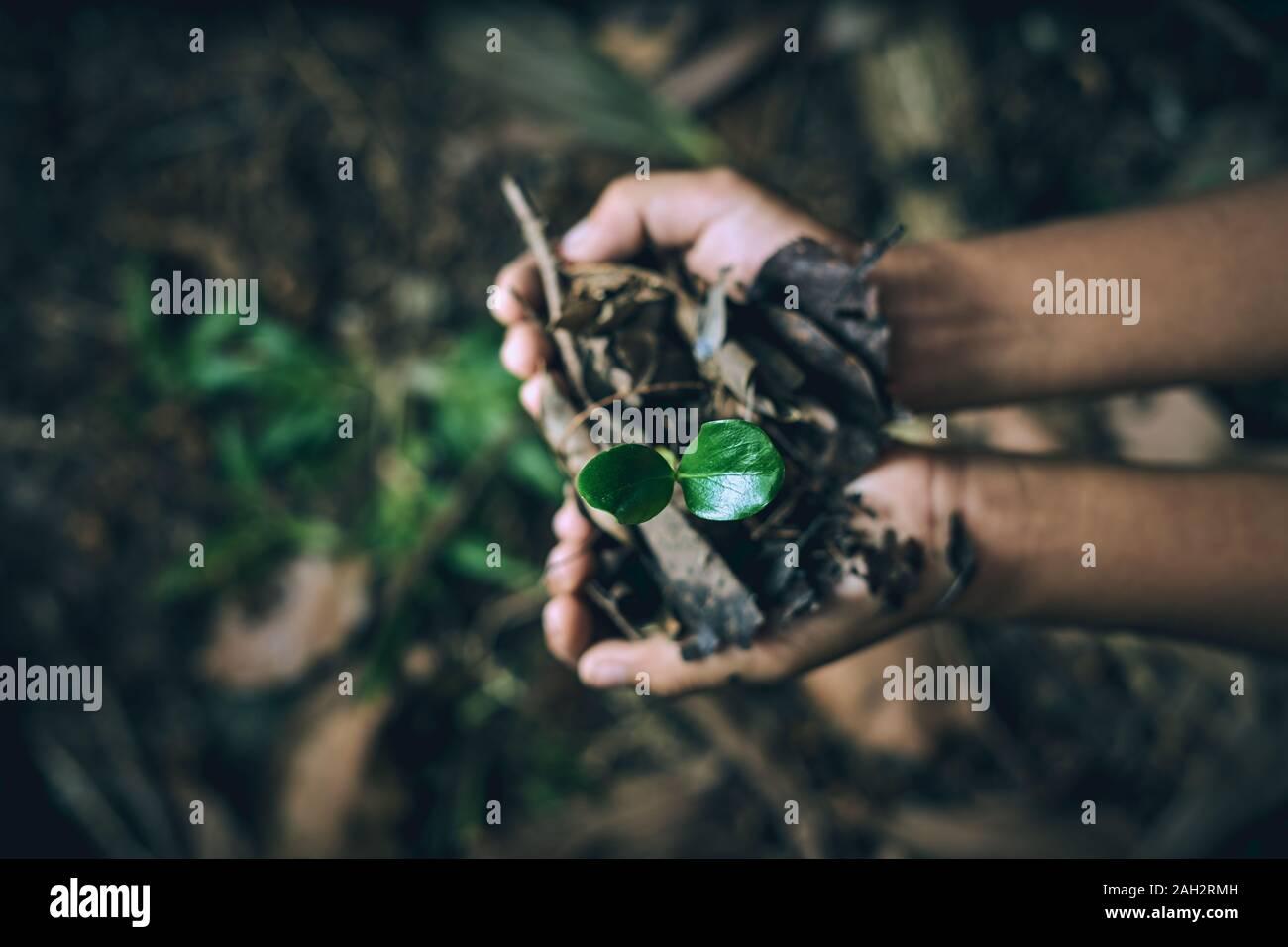 Chico manos sosteniendo los árboles jóvenes para plantar para reducir el calentamiento global, la conservación de los bosques Foto de stock