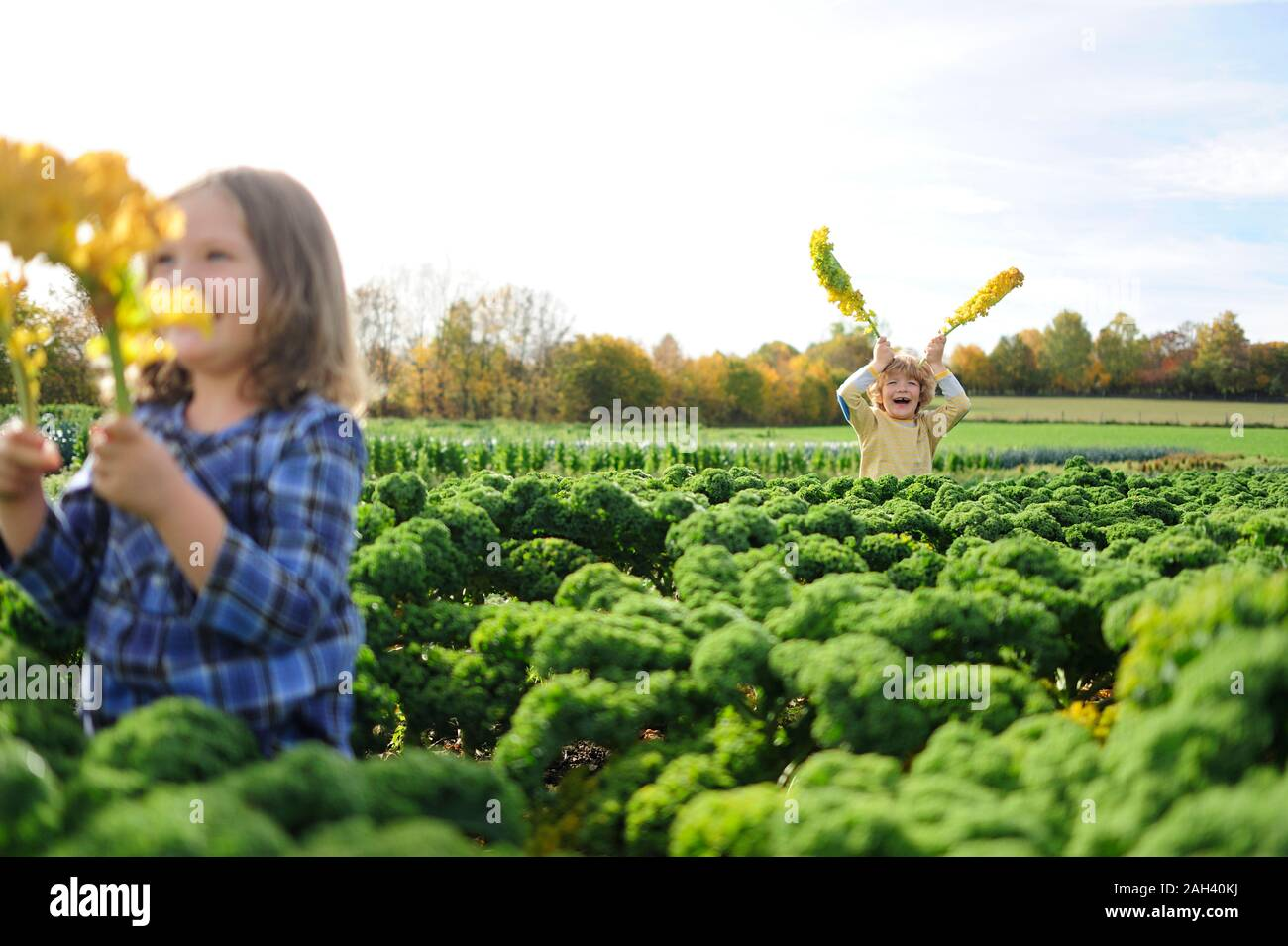 Niños y niñas en un campo kali, deja como orejas de conejo Foto de stock