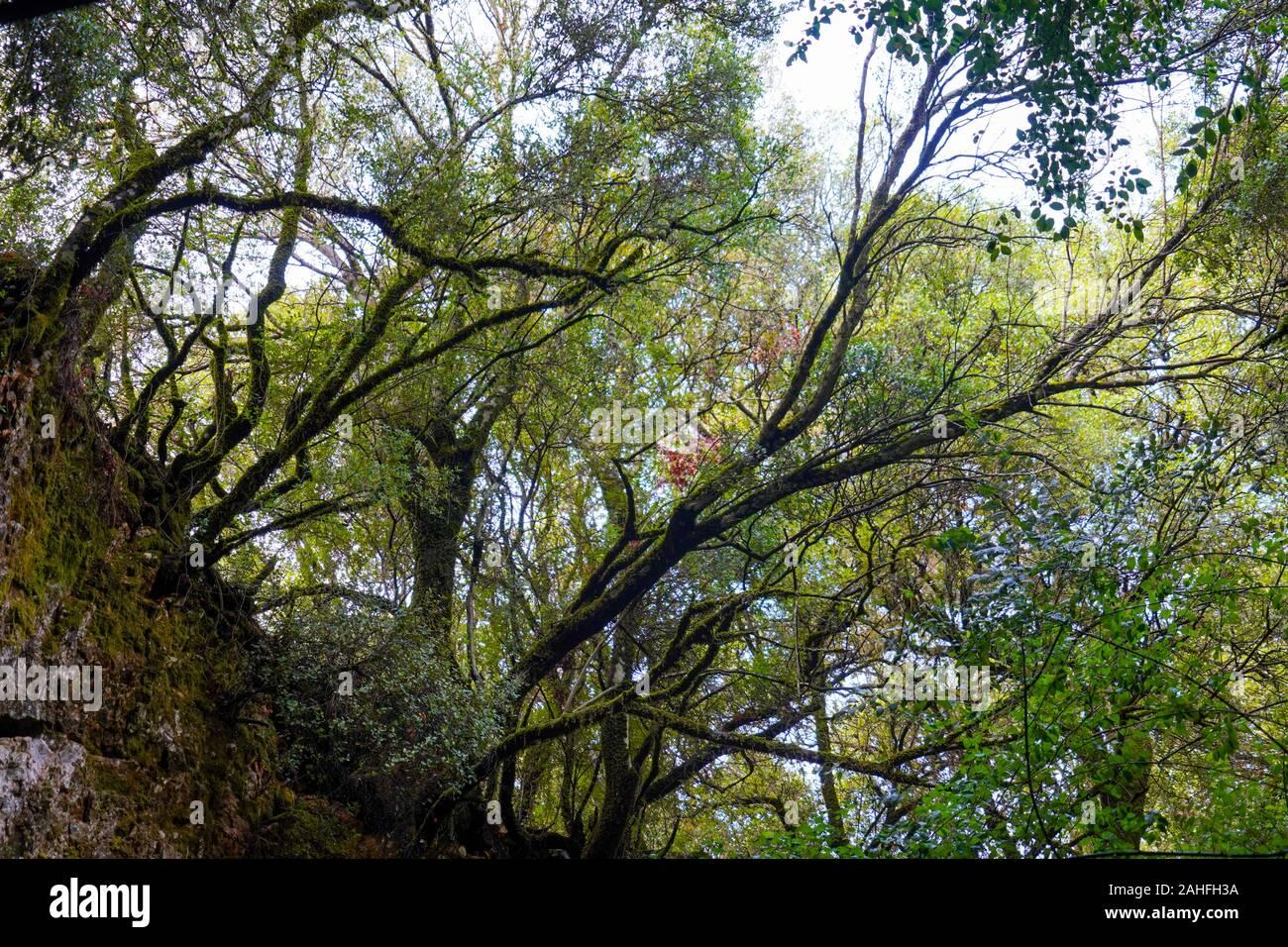 El denso bosque de la isla griega de Cefalonia, Mar Jónico, Grecia Foto de stock