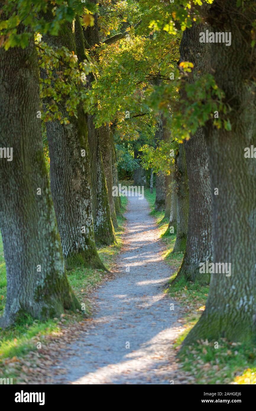 Vista de un callejón estrecho / sendero - bordeada de árboles. Finalmente la ruta hace un suave giro a la izquierda. Concepto de misterio, lo desconocido, el viaje. Foto de stock