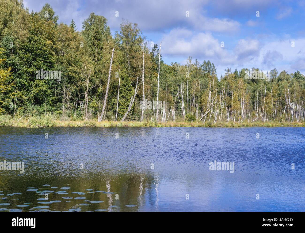 Vista sobre el lago Jezioro Francuskie (Francés) Reserva Natural Dylewo colinas parque paisajista, Ostroda County en Polonia. Foto de stock