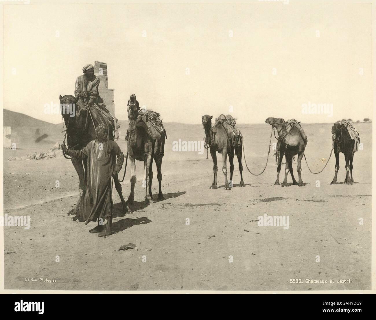 Los camellos en el desierto. Schroeder & Cie (Impresora) Edición Photoglob (editor). La vida y los paisajes de Egipto: estudios en heliotypies extrae de Foto de stock