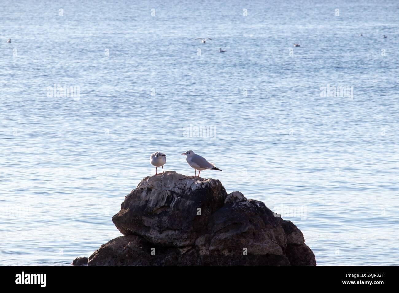 Dos gaviotas sobre una roca en el mar.brillante mar azul, grupo que representa la relación de amistad. Mirando el uno al otro como si están hablando, peleando Foto de stock