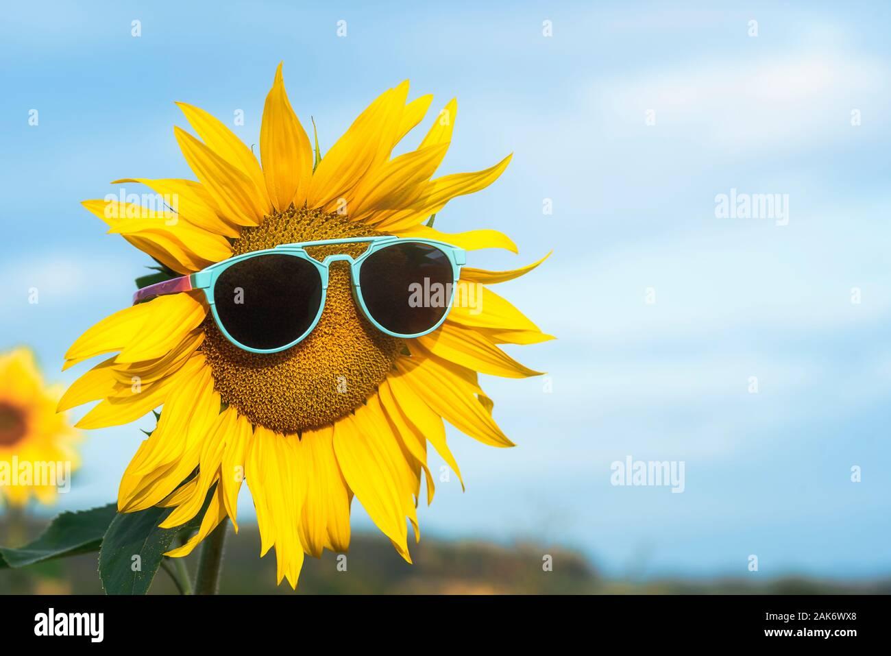 Divertido Girasol Con Gafas De Sol Fotos E Imagenes De Stock Alamy !feliz día de la mujer! https www alamy es girasol amarillo con gafas de sol contra un cielo azul en dia soleado de verano feliz y soleado verano concepto fondo de vacaciones de verano bloom girasol image338827504 html