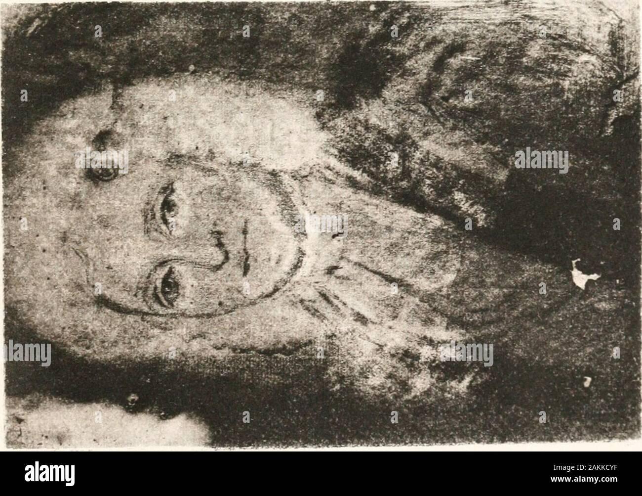 Los fundadores; retratos de personas nacidas en el extranjero que llegaron a las colonias en América del Norte antes del año 1701, con una introducción, Esbozos Biográficos y comentarios sobre los retratos . 1-1< K o CD K. (30 IPOBUC UBRARTi Foto de stock