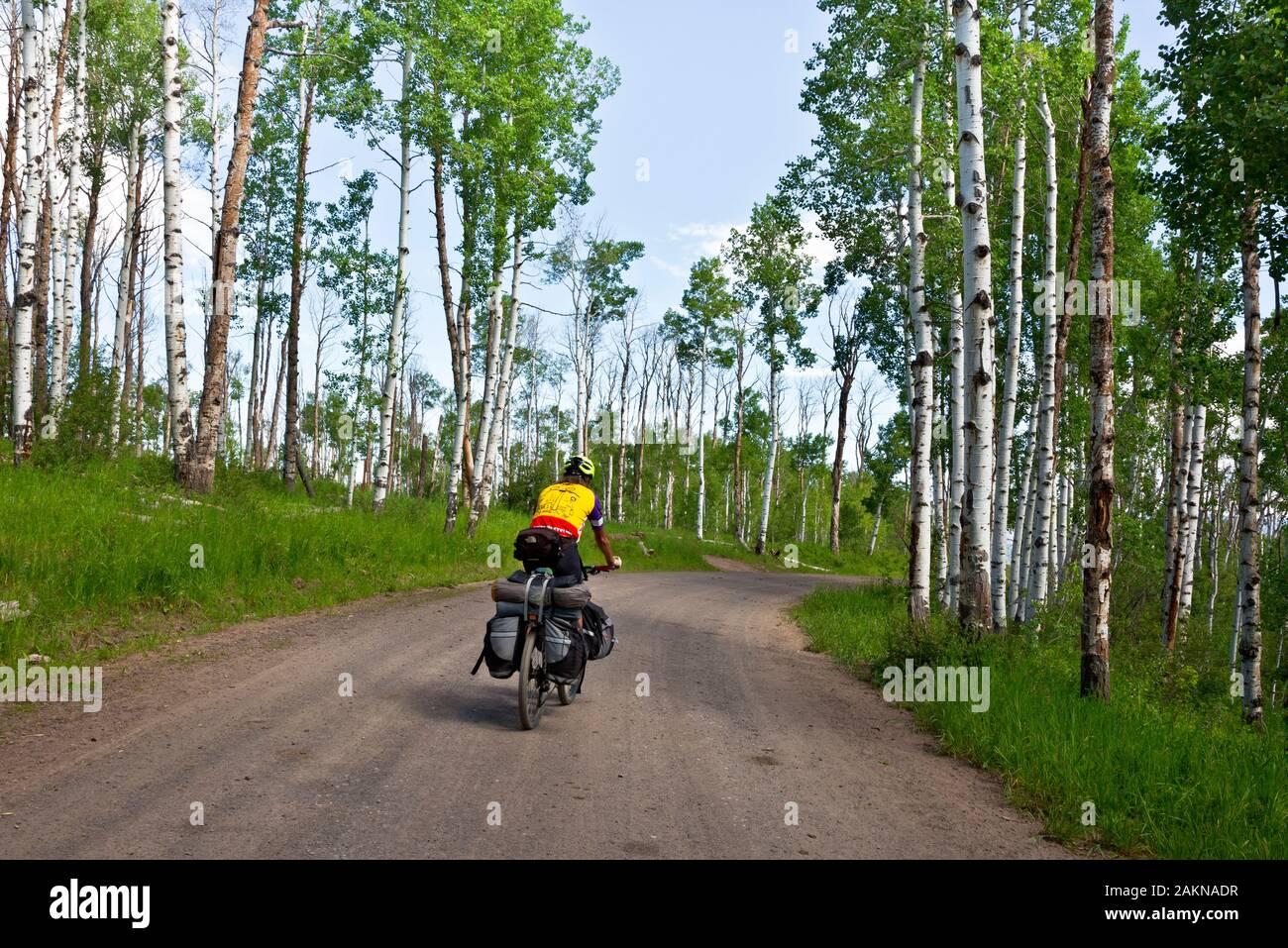 CO00208-00...Colorado - Caballo a través de un forro de árboles de Aspen por la carretera 129 en la sección alternativa Columbine de la gran brecha de ruta en bicicleta de montaña. Foto de stock