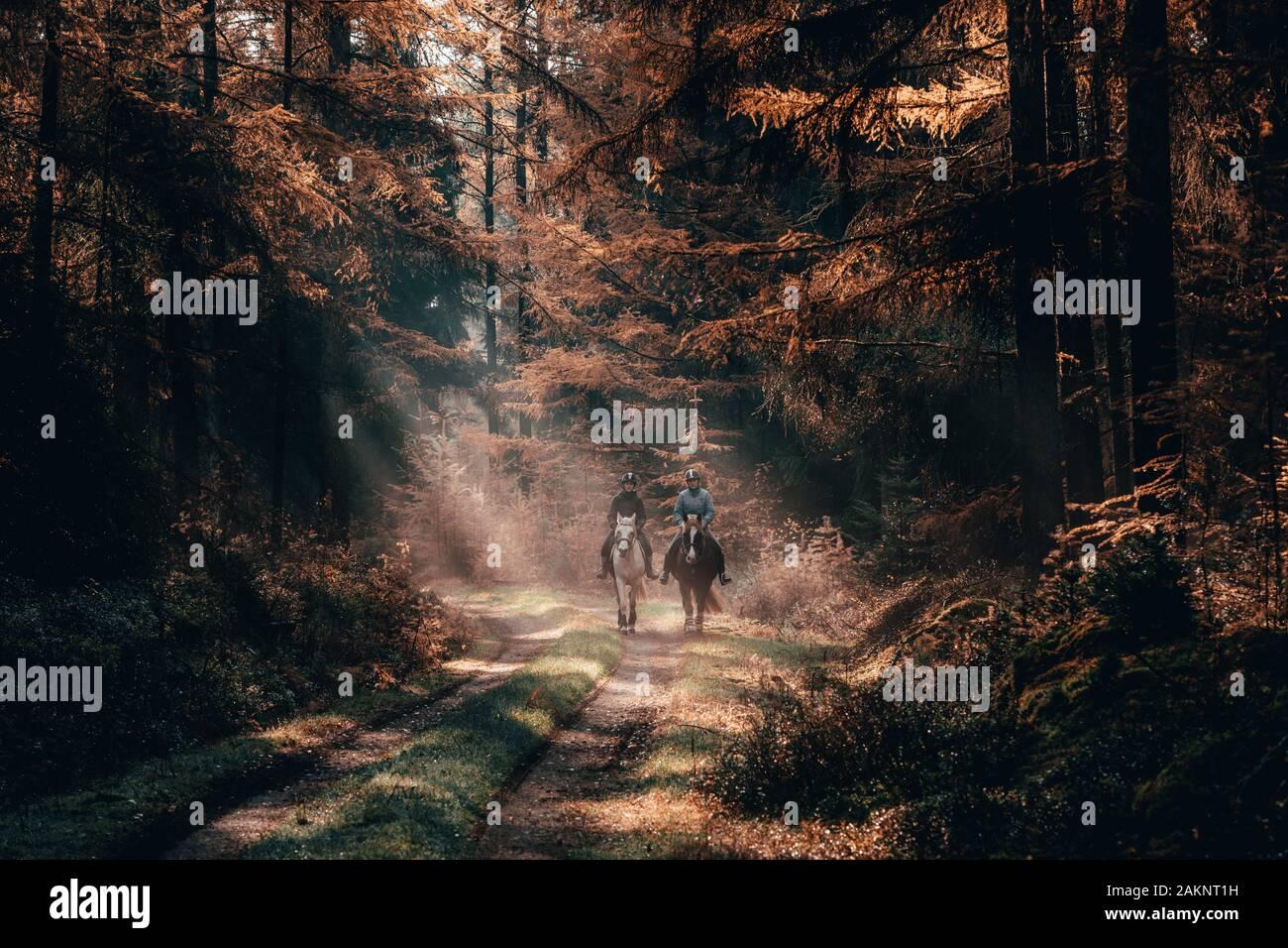 Luneberg, Alemania - 10 Nov, 2019: Dos mujeres esquestrians montar a caballo en los bosques Heide woodand con luz dorada del sol de otoño emitidos sobre ellas. Foto de stock