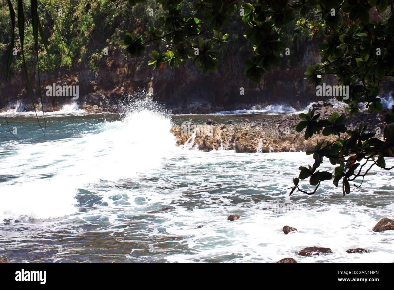 Olas rompiendo en un afloramiento rocoso enmarcado por las hojas de un árbol de Acacia mangium en Bahía Onomea Papaikou, Hawaii, EE.UU. Foto de stock