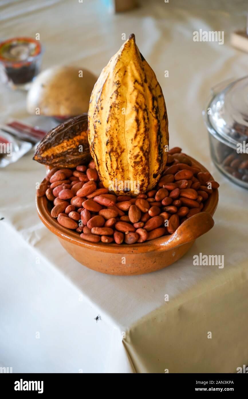 Vaina de cacao o frijoles de chocolate y planta en la fábrica de Mazunte, Huatulco, México, Bahia de Huatulco, Foto de stock