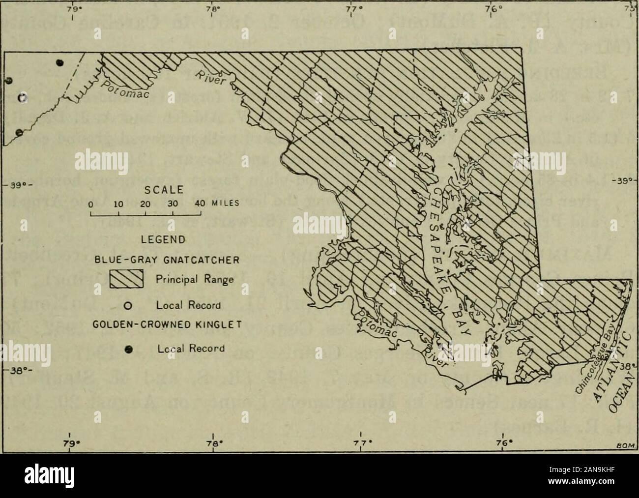 La fauna de América del Norte . Diciembre 26,1952. Bandas.-Una recuperada en el condado de Calvert en octubre 7,1934, había sido en bandas como juvenal en el sudoeste de Nueva Hamp-shire, el 10 de agosto de 1933. Otro príncipe GeorgesCounty anilladas en el 13 de octubre de 1943, fue recuperado el 15 de abril de 1946,en el norte de Virginia (alrededor de 20 millas desde el punto de bandas). Las aves de Maryland Y EL DISTRITO DE COLUMBIA 253 familia Sylviidae azul-gris GNATCATCHER Polioptila caeru/ea (Linnaeus) estado.-cría y transitorio (véase la fig. 45) : Common enla Costa Este, costa oeste y la parte superior de Chesapeake sec-ciones; bastante comunes en el ri Foto de stock