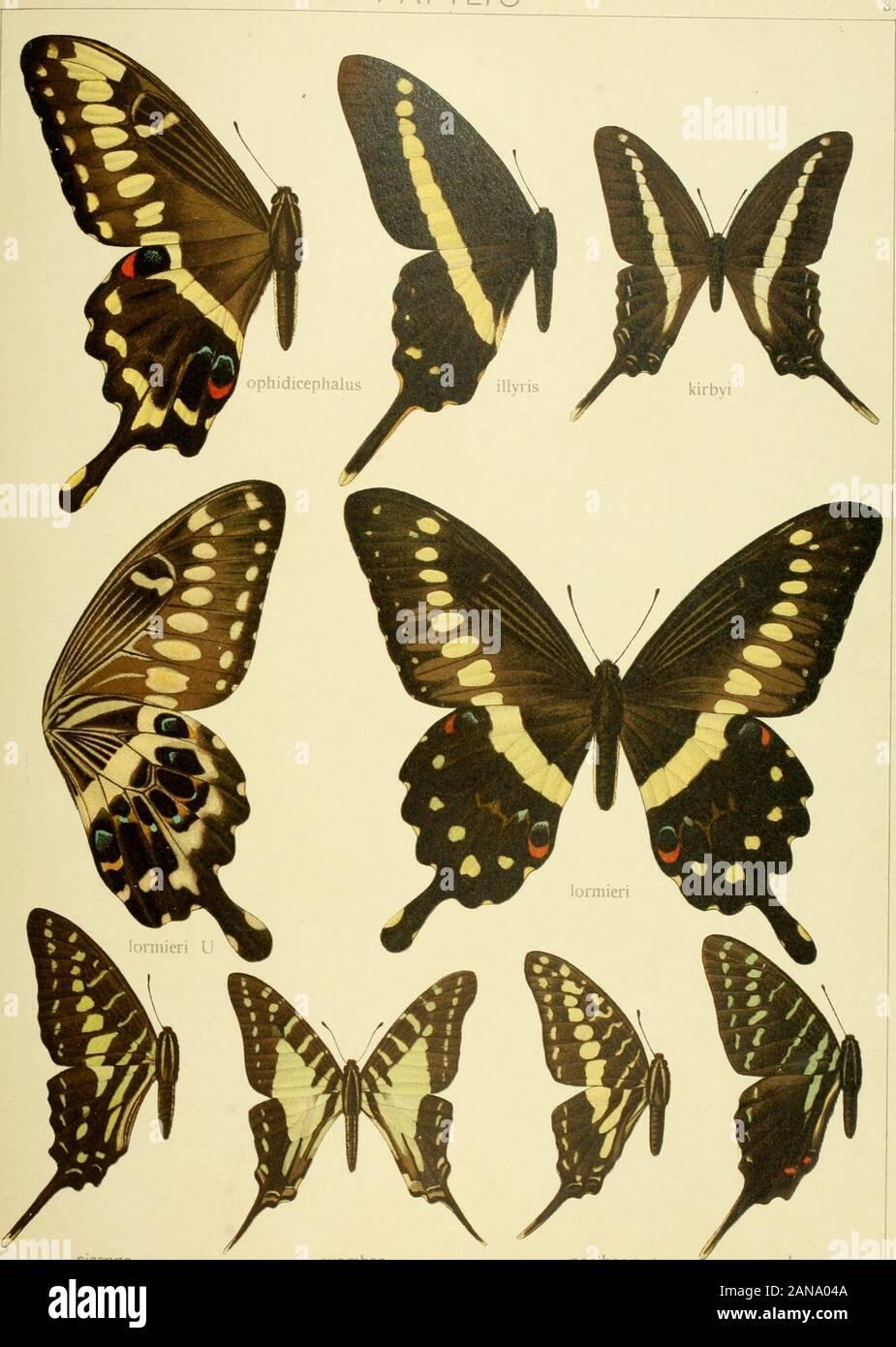 Die Gross-Schmetterlinge der Erde : eine systematische Bearbeitung der bis jetzt bekannten Gross-Schmetterlinge . Pars II. Fauna africana I XIII. PAPiLIO. sisenna t-vombar porihaon colonna Pars II. Fauna africana 1. 1 XIll PAPI LI O Foto de stock