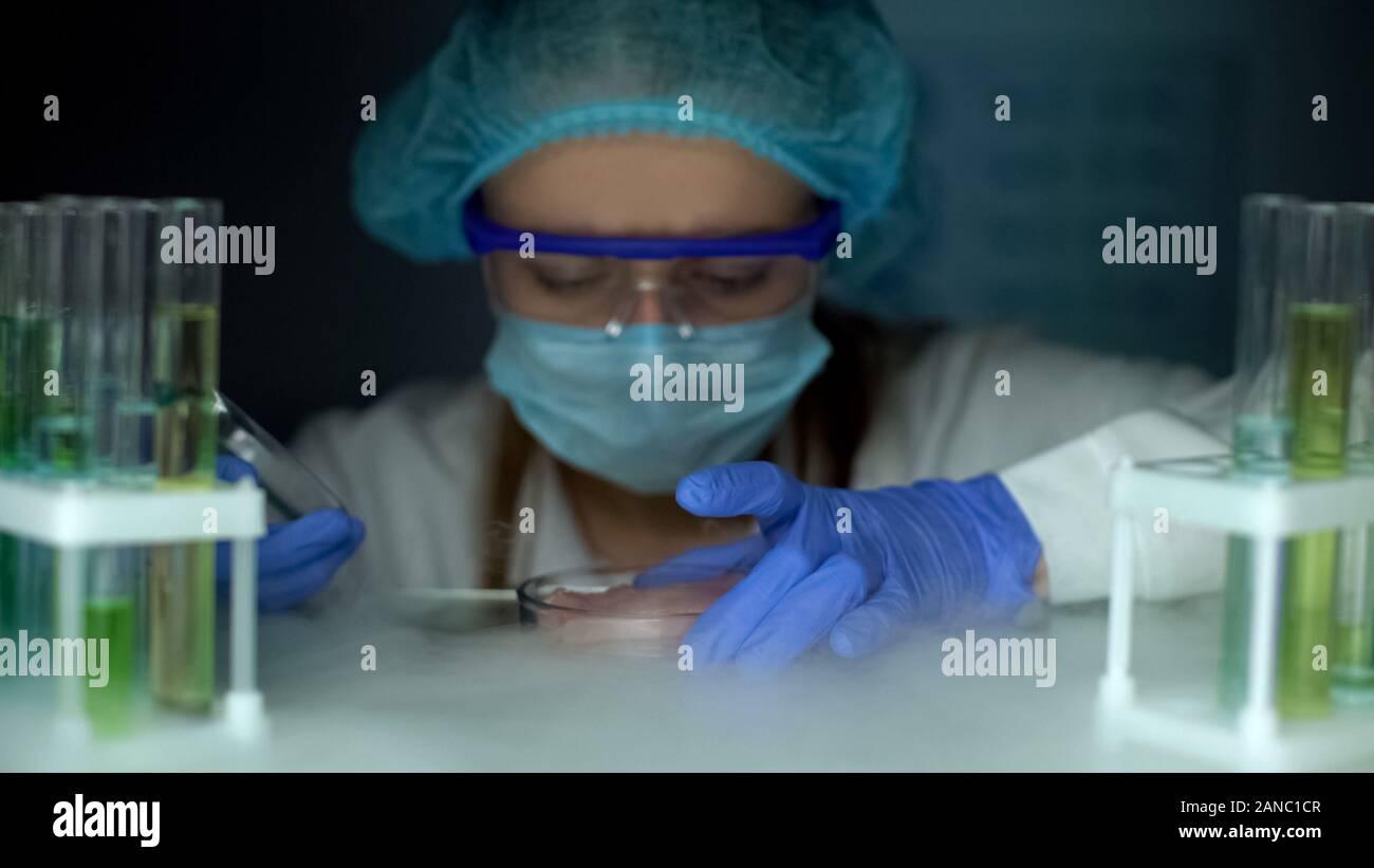 Scientist tomando muestras de carne en placa de Petri de nevera, análisis de tejidos infectados Foto de stock