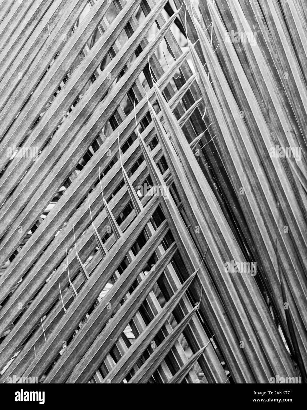 Abstracto geométrico fromed por frondas de palma. Foto de stock