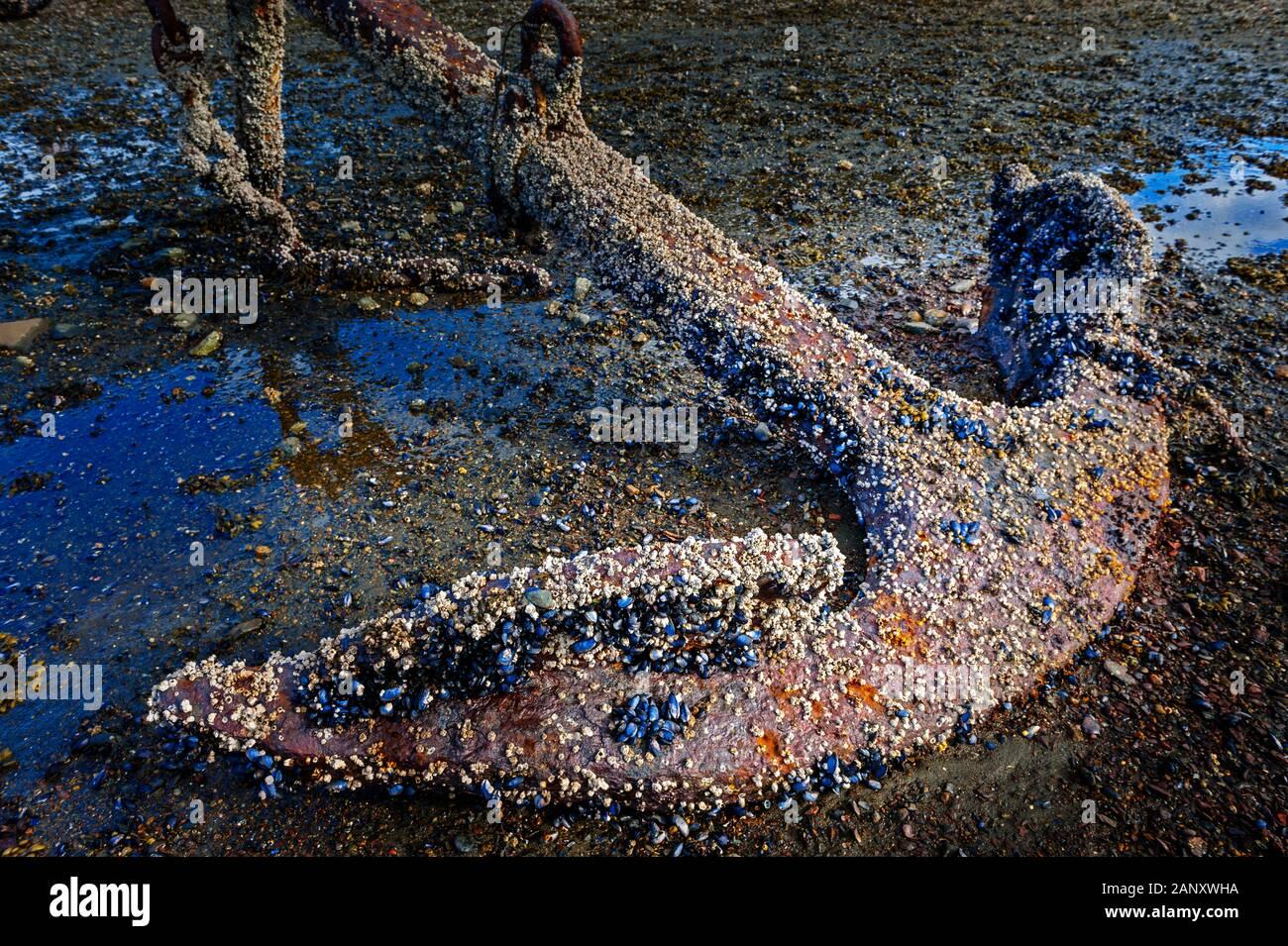 Oxidado viejo ancla ancla en el cementerio en Jamestown Bay en marea baja cerca de Sitka, Alaska, EE.UU. Foto de stock