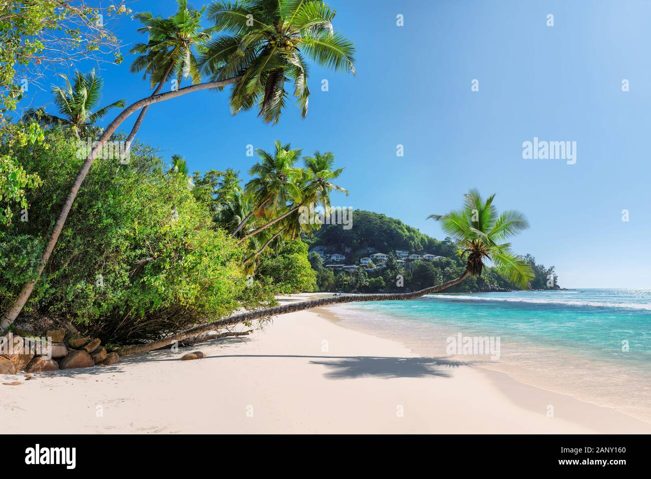 Hermosas palmeras de coco en Anse Takamaka beach, Mahe Island, Seychelles Foto de stock