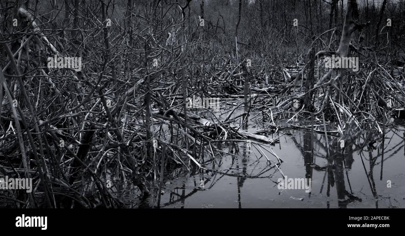 Árbol muerto en el bosque. Inundación en el bosque. Concepto de calentamiento global. Crisis ambiental mundial. Muerte, dolor, triste y antecedentes abstractos sin esperanza Foto de stock
