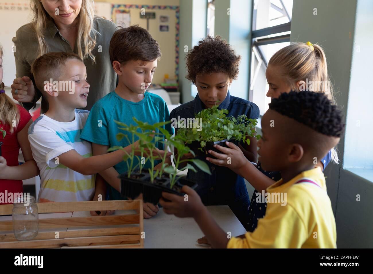 Profesora alrededor de una caja de plantas para una lección de estudio de la naturaleza en un salón de clases de la escuela primaria Foto de stock