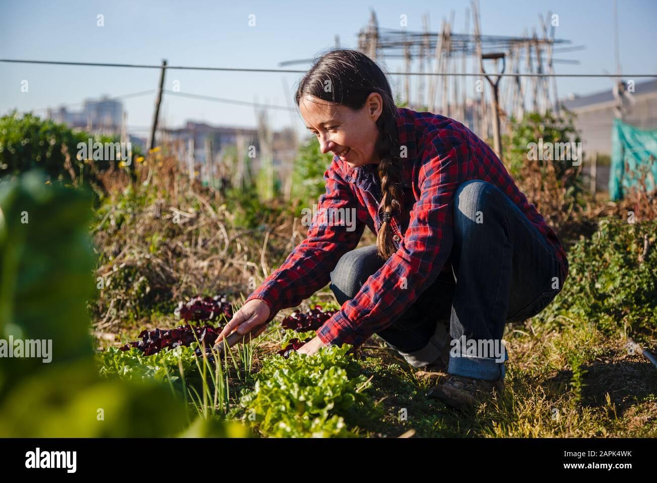 Mujer joven haciendo jardinería urbana en el día soleado de la primavera Foto de stock