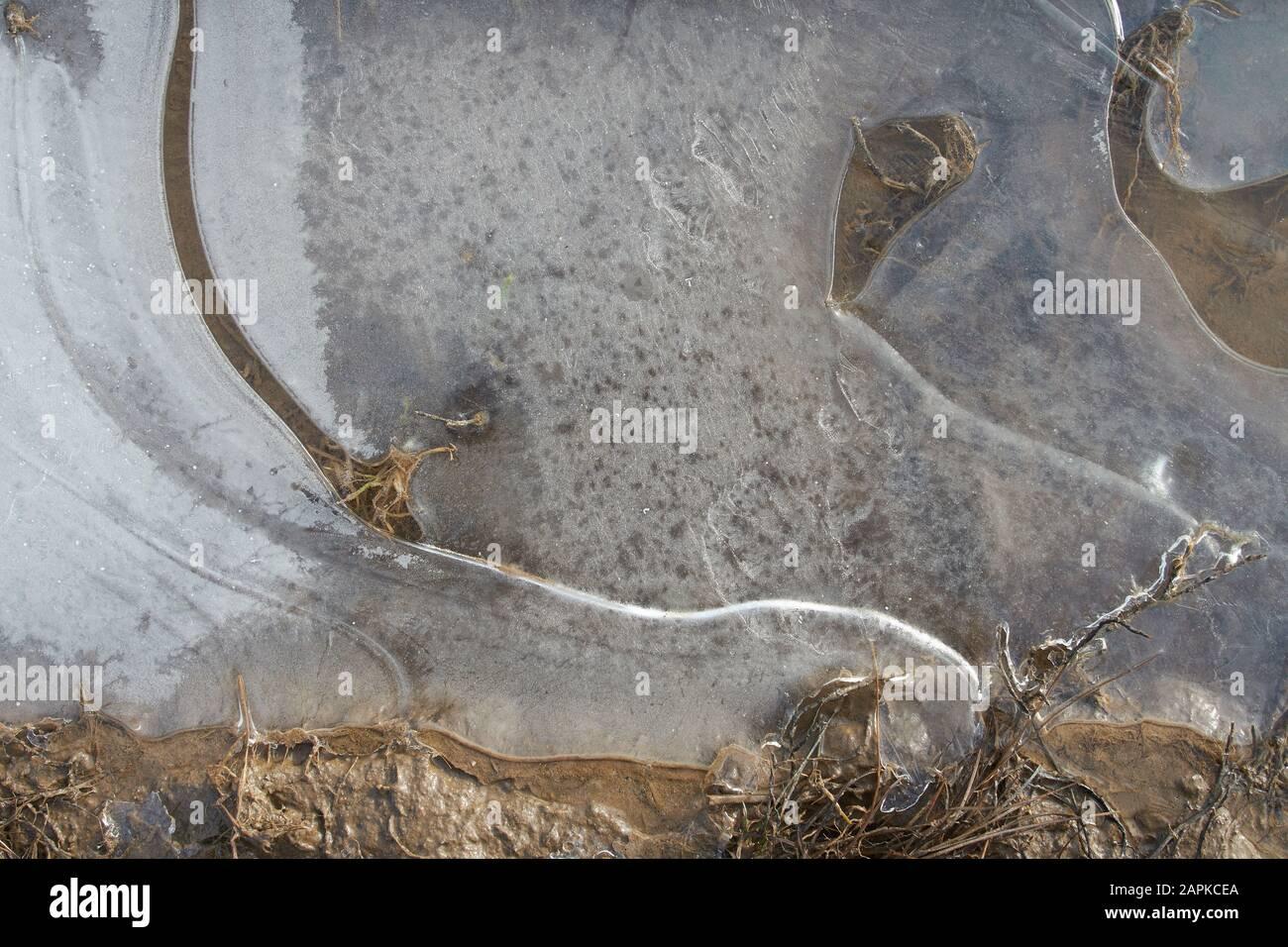 Hielo transparente fino en la superficie del charco Foto de stock