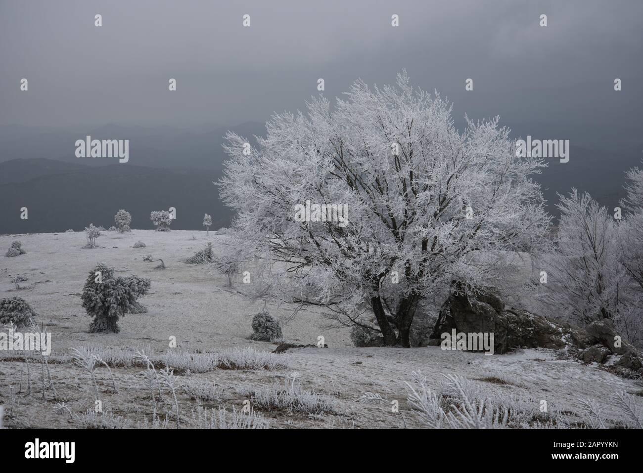 paisaje helado con niebla Foto de stock