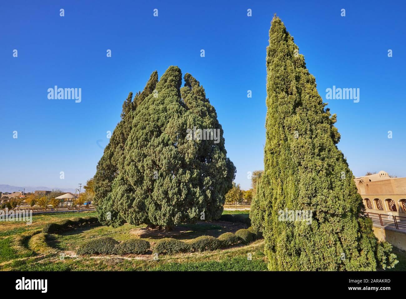 Un árbol de ciprés milenario en la ciudad de Abarkuh en Irán, tomado el 18 de noviembre de 2017. Mide 25 metros de altura y la circunferencia de su tronco es de 11.5 metros. Según la leyenda, fue plantada por el fundador religioso Zarathustra. El ciprés de Abarqu ha sido propuesto para la lista de sitios del Patrimonio Mundial. | uso en todo el mundo Foto de stock