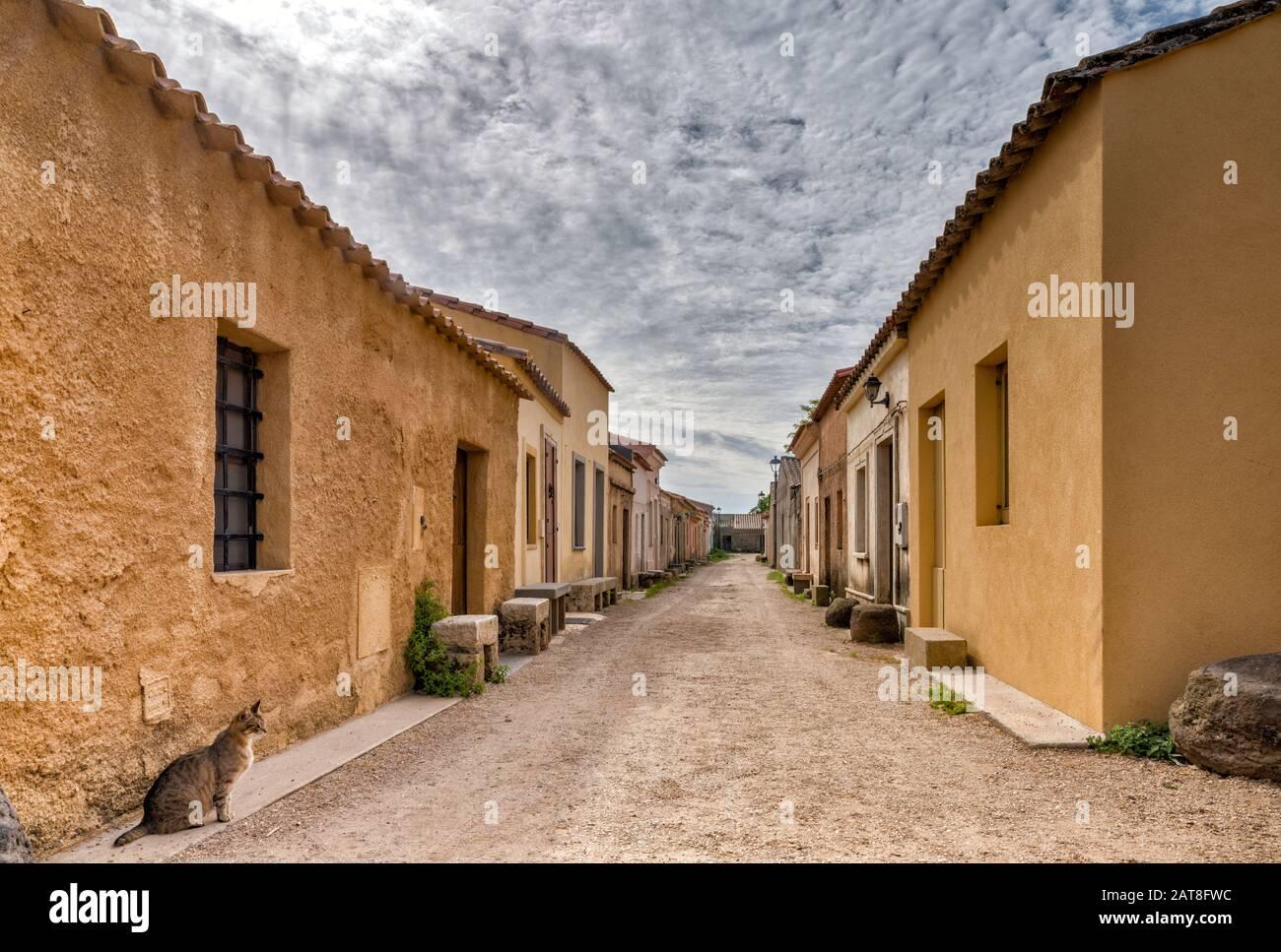 Gato solitario en la calle en un pueblo desierto de San Salvatore, península de Sinis, municipio de Cabras, provincia de Oristano, Cerdeña, Italia Foto de stock