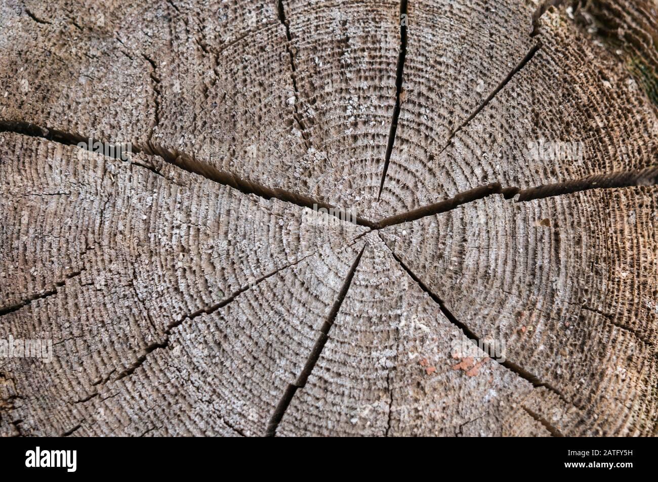 Una rebanada de un árbol antiguo con anillos anuales concéntricos y una grieta en el centro. La textura del árbol antiguo. Foto de stock