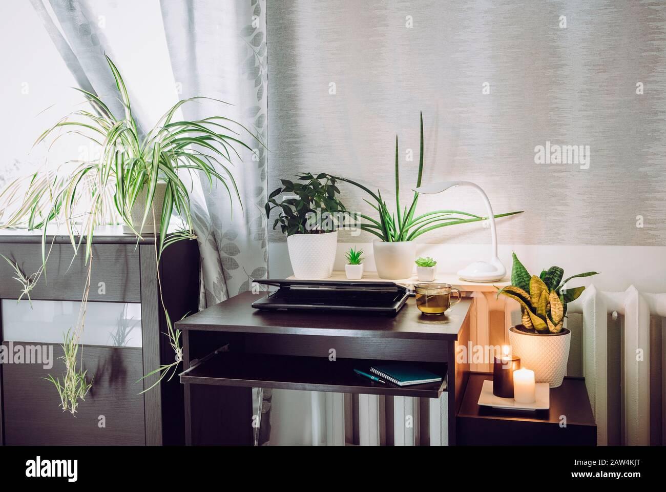 Gris sexo neutro oficina en casa con mucho de tranquilizar verde vivo macetas plantas de flores creciendo. Concepto de estilo de vida saludable y verde. Foto de stock
