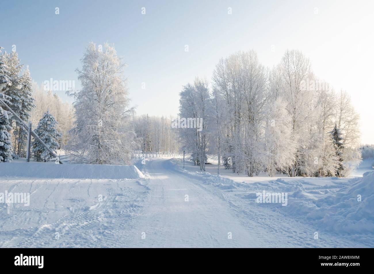 Carretera nevada a través del bosque de invierno. Hermosos árboles en el hoarfrost blanco Foto de stock