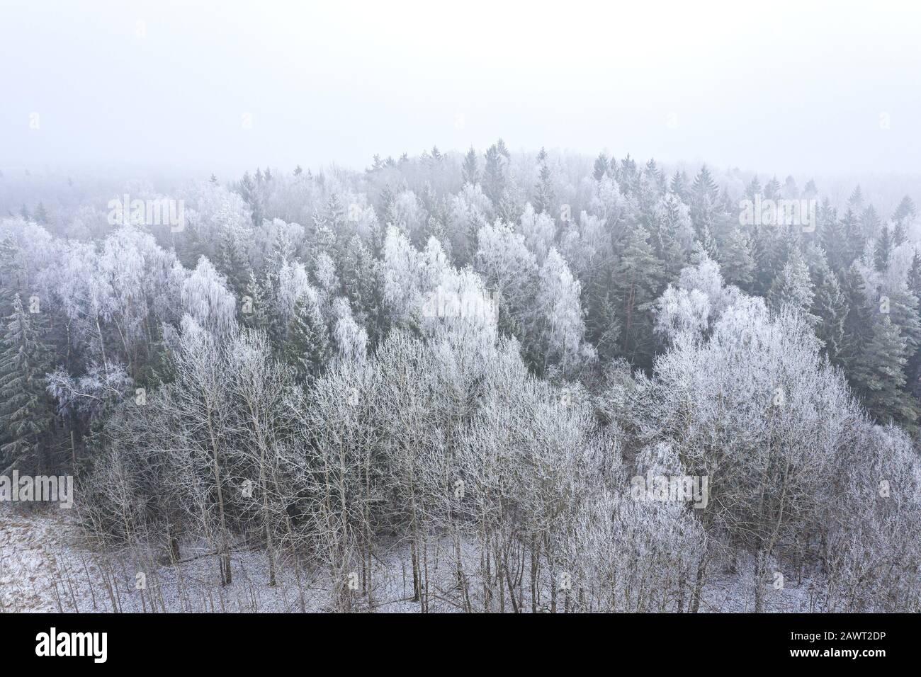 árboles en bosque mixto cubiertos de hoarfrost. paisaje de invierno niebla. vista aérea desde el drone Foto de stock